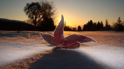 macro_leaf_light_frost_sky_snow_evening_80989_1920x1080