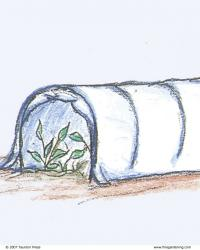 Hooded-Tunnel Cold Frame