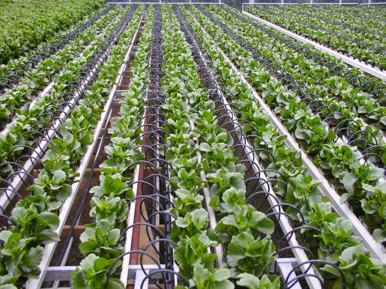 Pot_irrigation_by_On-line_drippers.jpeg